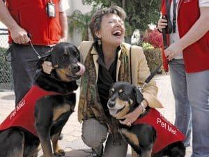 В аэропорту Лос-Анжелеса собаки снимают стресс пассажирам
