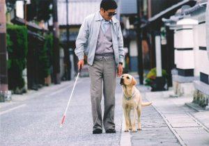 В Минске будут обучать собак-поводырей