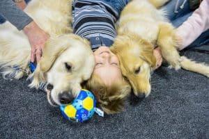 Собаки-терапевты в Омске