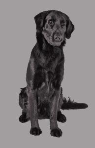 Потеряшки - Объявления о пропаже собак на Телеканале «Пёс и Ко»