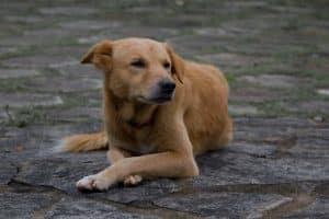 """Наказание Телеканал """"Пёс и Ко"""""""