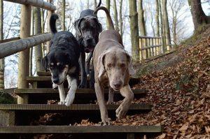 "Налог на собак Телеканал ""Пёс и Ко"""