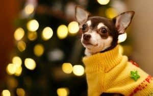 """Фестиваль желтой собаки Телеканал """"Пёс и Ко"""""""