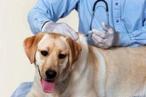 """Бесплатная вакцинация Телеканал """"Пёс и Ко"""""""
