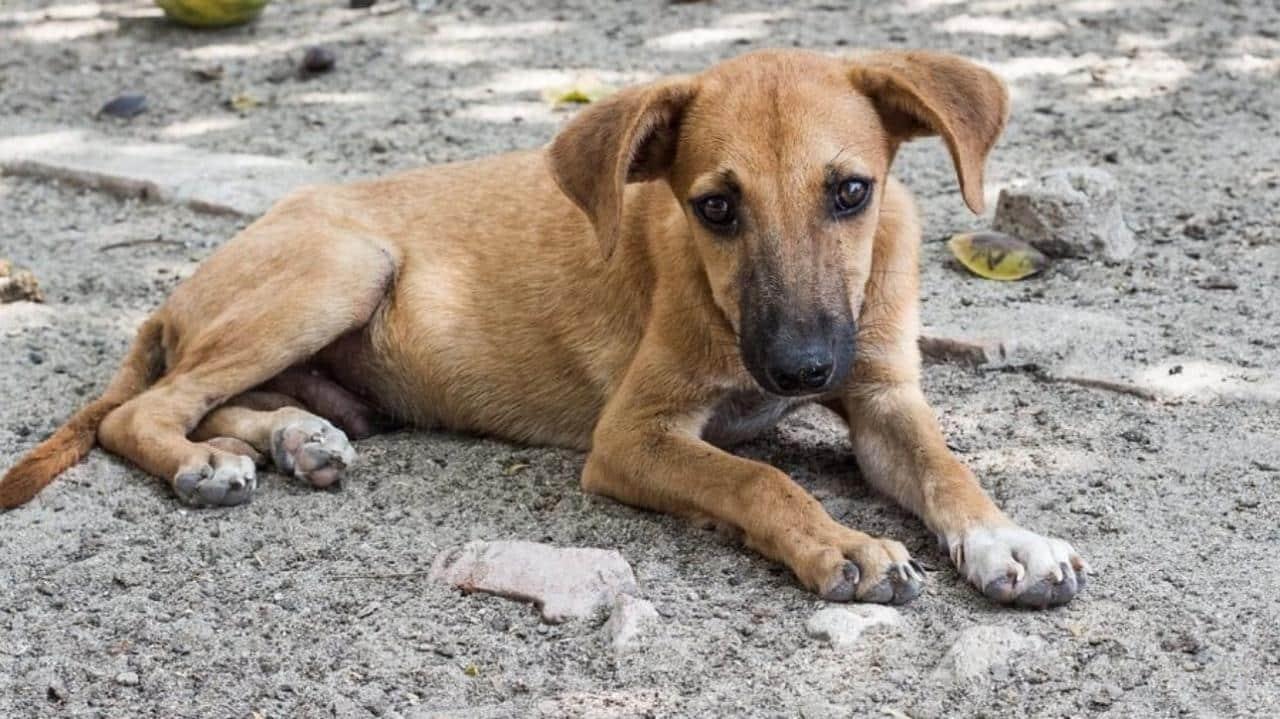 В Ростовской области догхантеры травят собак
