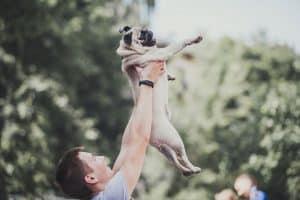 DOG-семьи