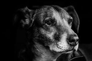 """Год Собаки Телеканал """"Пёс и Ко"""""""