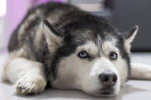 "Щенка Телеканал ""Пёс и Ко"""