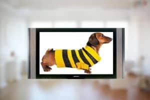"""Билайн Телеканал """"Пёс и Ко"""""""