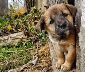 """Пёс и Ко"" Телеканал ""Пёс и Ко"""