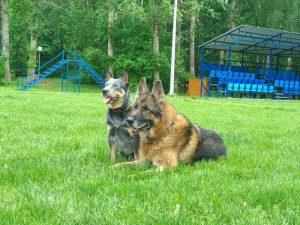"""Международный день собак Телеканал """"Пёс и Ко"""""""